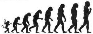darwin-apes